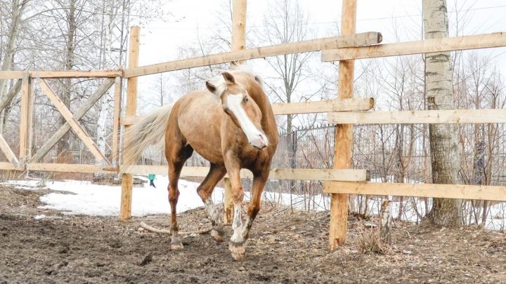 «Победа, Гибкая, Малышка, Нюша и Оскар не спаслись»: в Перми на пожаре в конном клубе погибли лошади