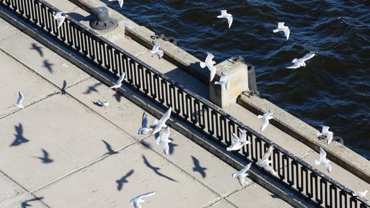 Последние выходные лета в Волгограде будут жаркими и солнечными