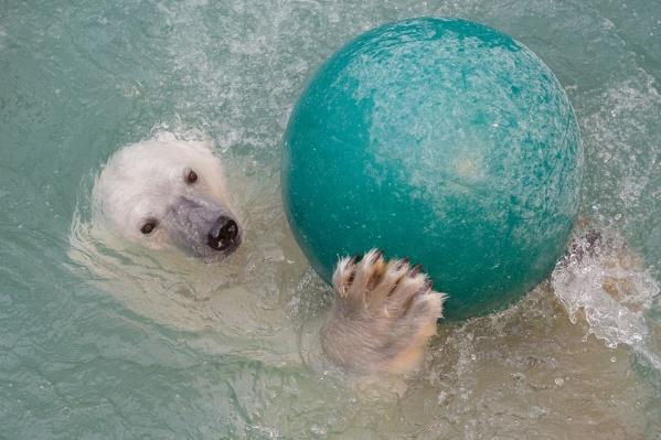 Аврора плавает с шариком