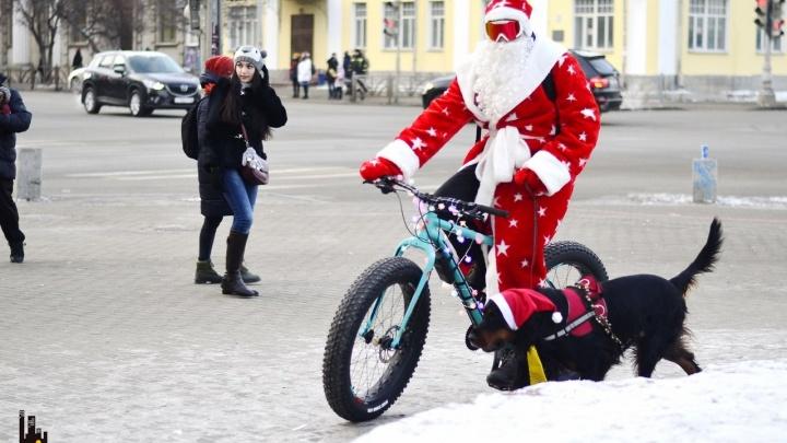 Пятьдесят велосипедистов и собака прокатили 12 километров по праздничному Екатеринбургу