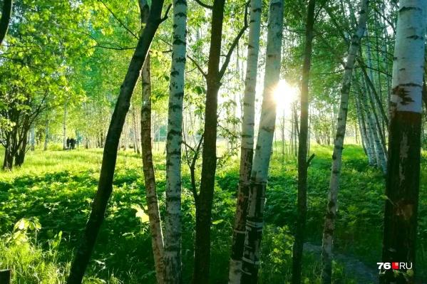 Сегодня и завтра в Ярославской области будет солнечно