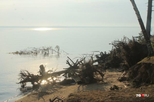 Волонтёры прошерстят весь берег