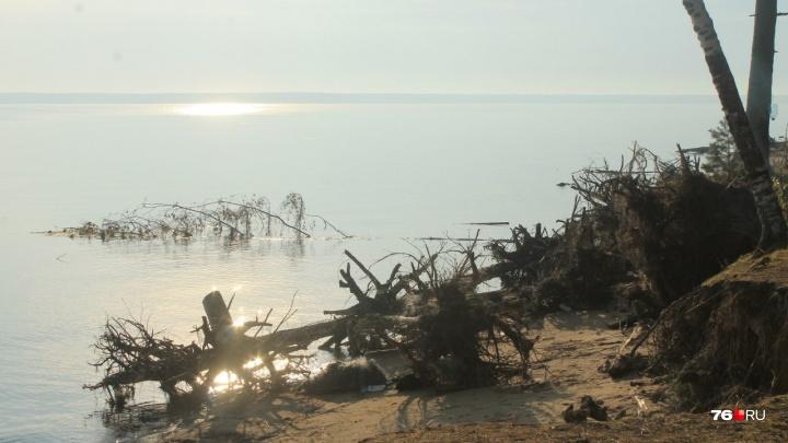 На Рыбинском водохранилище устроят большую уборку