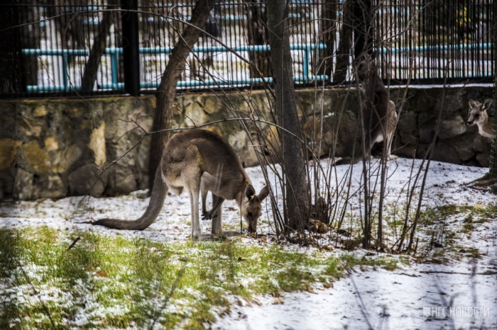 На выходных в Новосибирске будут дожди и мокрый снег