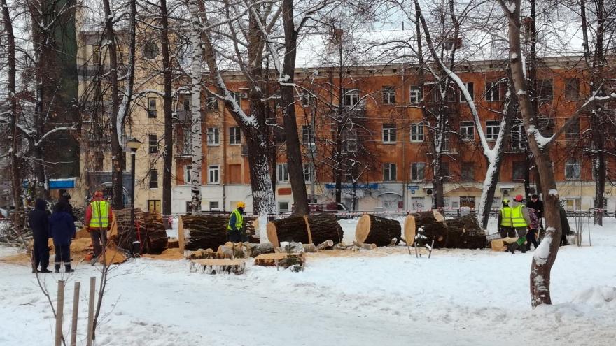 В сквере у Театра оперы и балета в Перми спилили тополь, которому больше ста лет