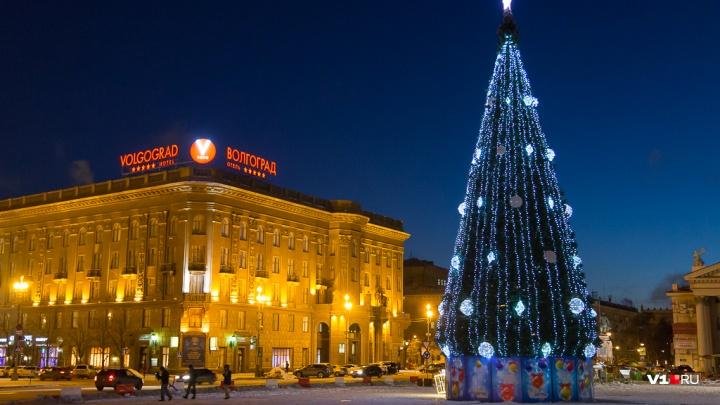Волгоградская новогодняя ёлка заняла 20-е место в России по габаритам