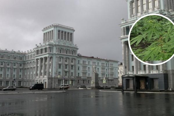 Житель города выращивал коноплю прямо в своей квартире