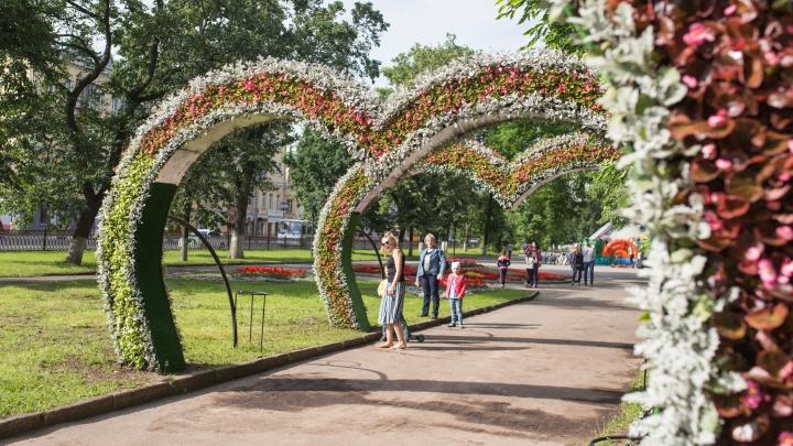 Ярославцев обвинили в краже цветов с городских клумб: реакция мэра