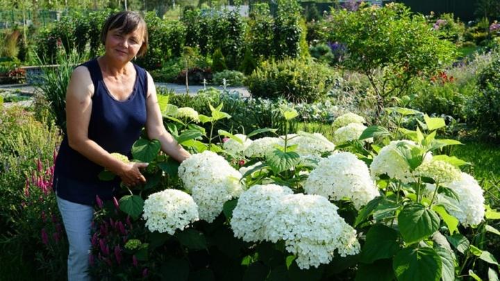 Английские розы Дэвида Остина, редкие хвойные растения и овощи-гиганты: что можно вырастить в Сибири