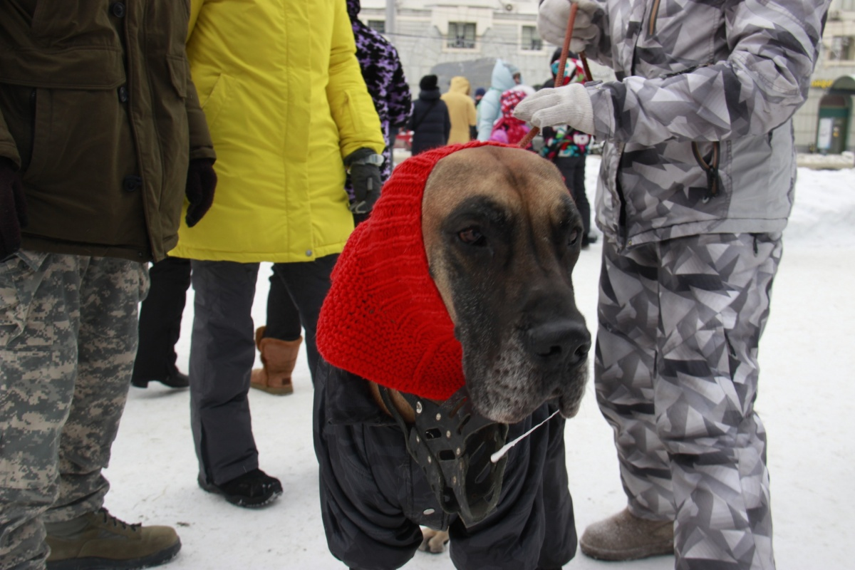 Среди участников пикета был замечен пес по кличке Тор