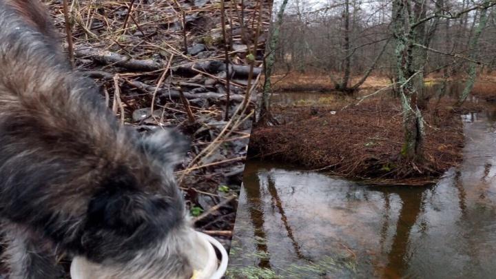 «Сидел на островке посреди воды»: ярославна спасла собаку, которую бросили умирать в лесу