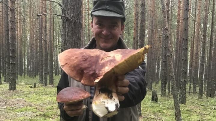 Тюменцы ведрами несут грибы из леса: тут и гигант весом в три килограмма, и ведро маслят за полчаса