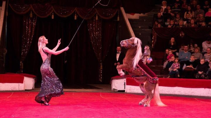 Куда сходить в выходные в Кургане: от цирка до фестиваля здоровья в афише двух дней от 45.RU