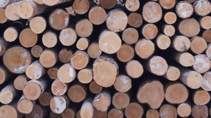 АЦБК выступил генеральным партнером акции «День экологического долга» в России