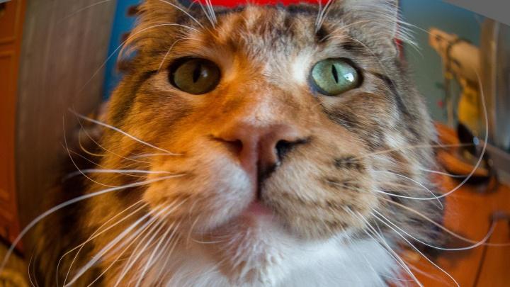 Кошки лечат? У рыбки коротка память? Развенчиваем мифы про животных с пермским ветеринаром