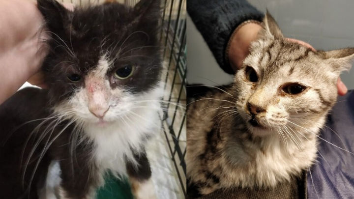 В Екатеринбурге вскрыли «черную» передержку, где кошки умирали от инфекций и собачьих зубов