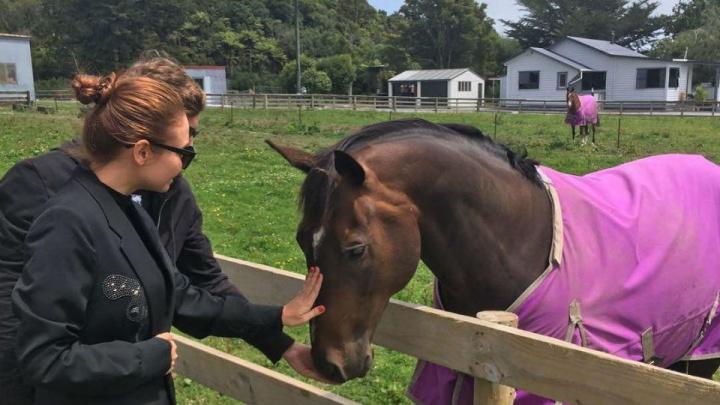 Конь в розовом пальто: Ляйсан Утяшева нашла друга в Новой Зеландии