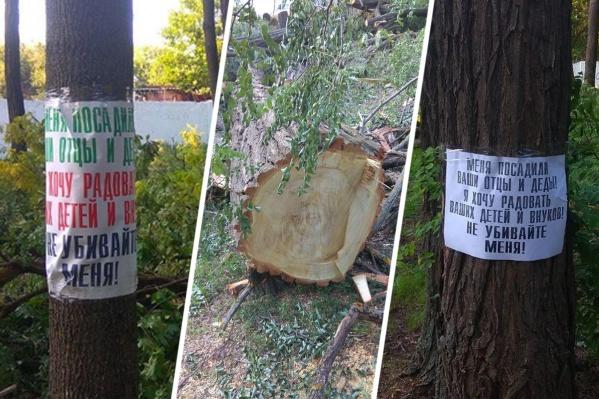 Городские власти заявили, что не отдавали распоряжение варварски опилить деревья в парке «Осенний»
