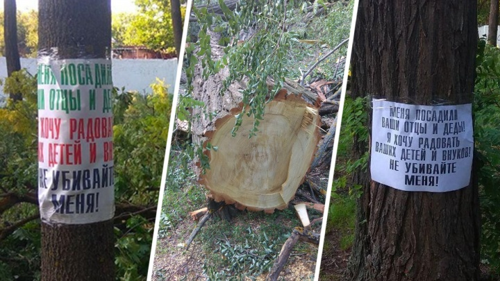 «Кто это допустил?»: депутат возмутился варварской обрезкой деревьев в ростовском парке