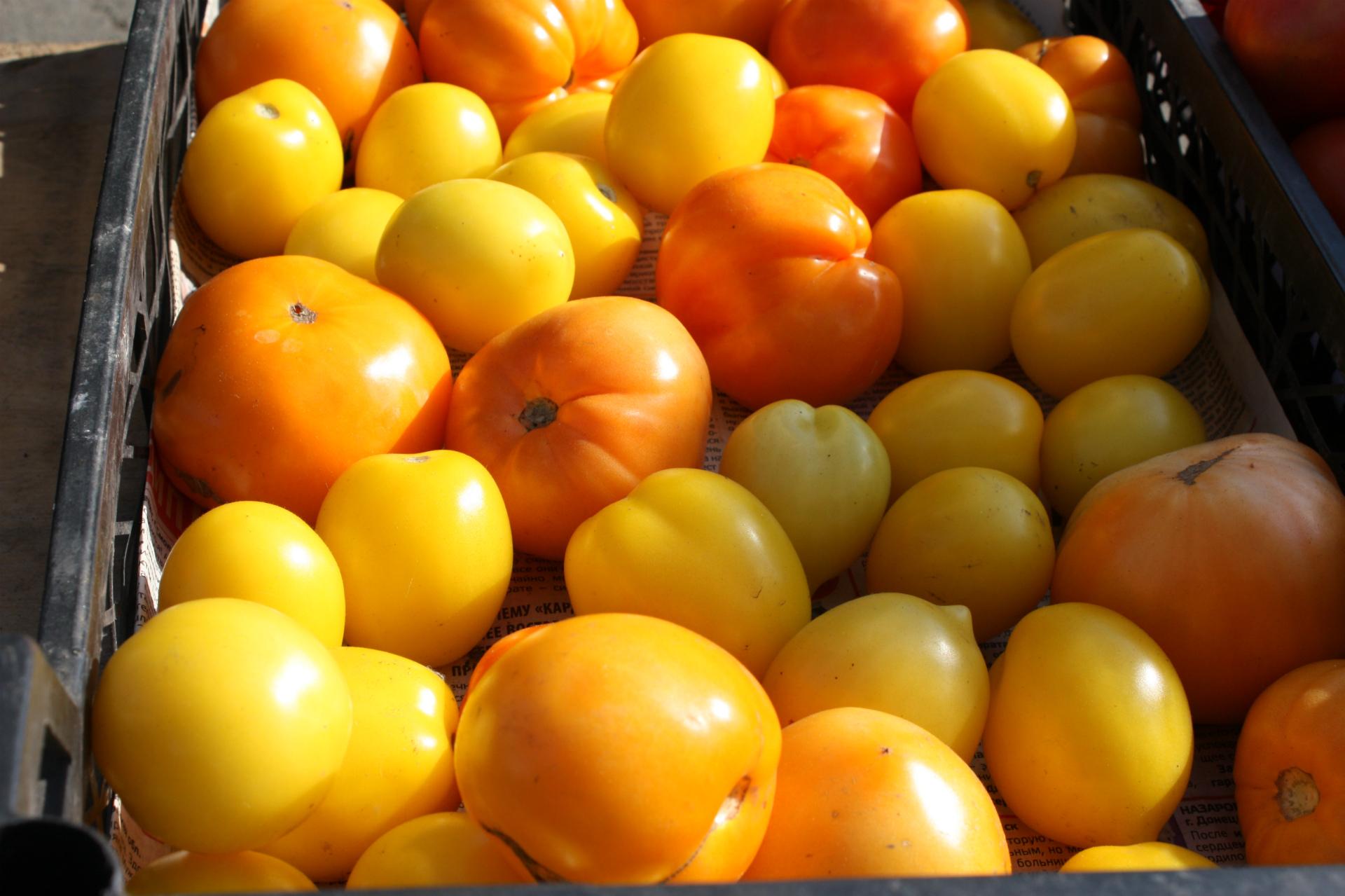 — «Золотые купола», «красное солнышко», «пальчиковые», всего 60 рублей килограмм, — расхваливает продавщица ярко-желтые помидоры. Утром полный ящик был, а сейчас всего ничего осталось, одно название, что помидоры!