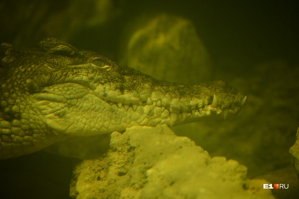 В океанариуме можно встретить очень интересных обитателей