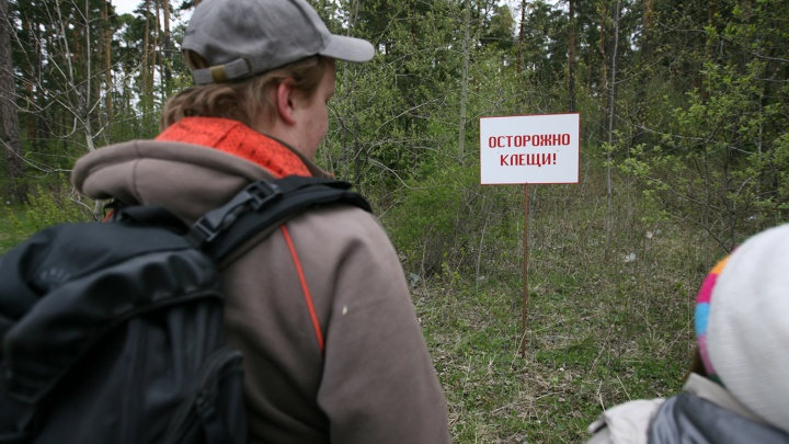 Власти разбрызгали отраву от клещей по паркам Новосибирска