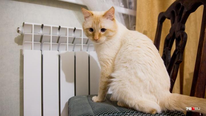«Будьте готовы к воздушиванию»: отопление в жилых домах включат через несколько дней