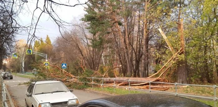 Упавшее дерево на Академической