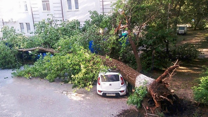 Упавший тополь раздавил легковушку в центре Ростова