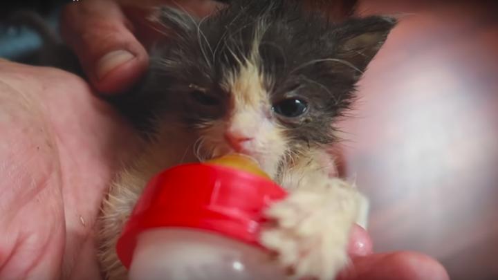 «Чему такие родители научат детей?»: под Волгоградом четырёх родившихся котят выкинули в мусорку