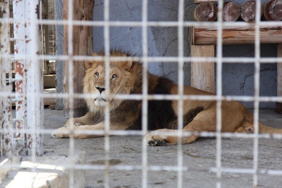 В зоопарке признают, что у Ричарда есть проблемы со здоровьем