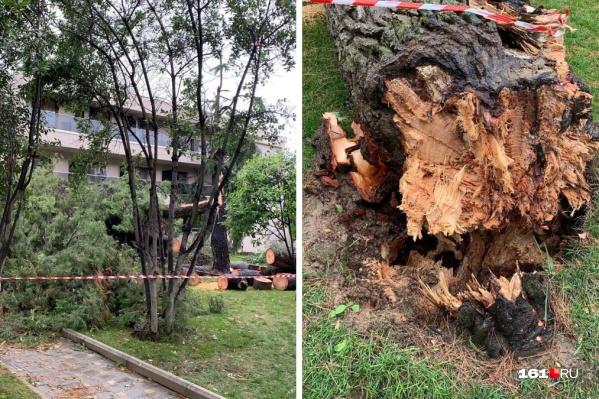 Дерево рухнуло на отца с маленьким ребенком на руках