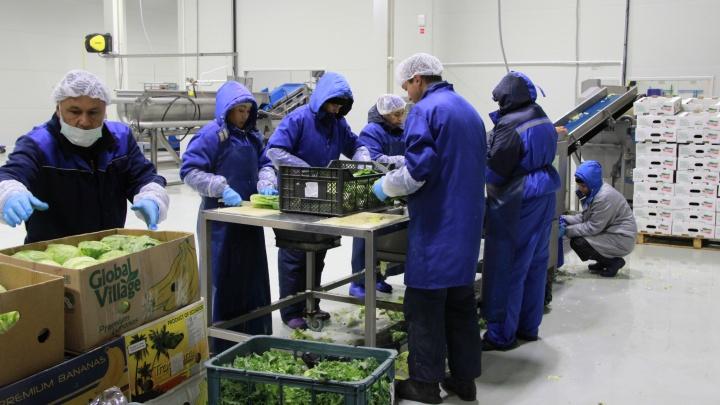 При участии Сбербанка в Тюмени открылся завод по переработке зелени
