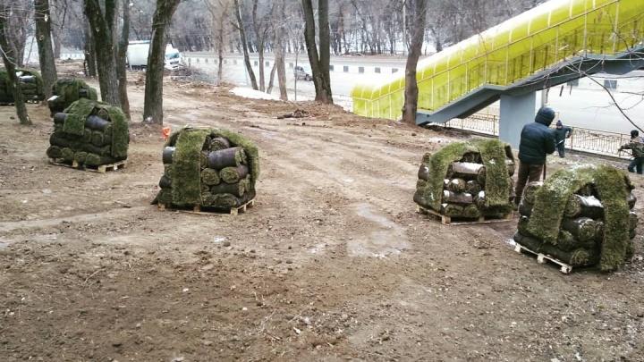 «Аналог такой глупости сложно найти»: эксперт раскритиковал озеленение Ростова в мороз