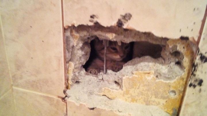 В Верхней Пышме жильцам второй раз продолбили стену перфоратором, чтобы спасти котенка