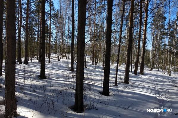 Егеря валили деревья в лесу недалеко от базы отдыха «Чайка»