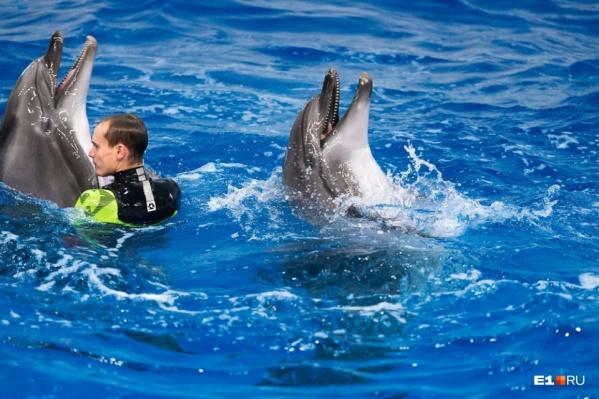 Кажется, с тренером дельфины дружат — иначе не стали бы его катать