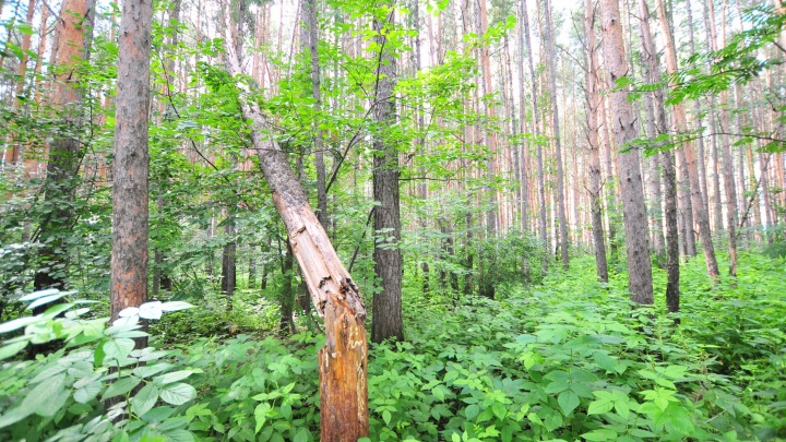 Уралец отсудил у властей полмиллиона за упавшее на его Renault дерево