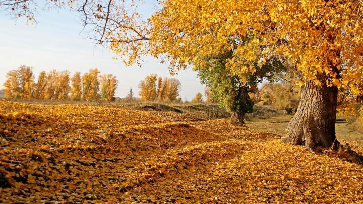 Короткое бабье лето: синоптики дали прогноз погоды на выходные в Башкирии