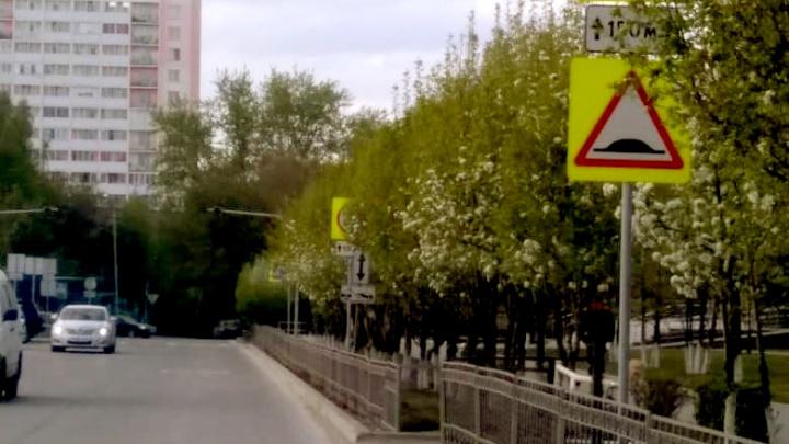 Пышная листва спрятала дорожные знаки на улицах Новосибирска