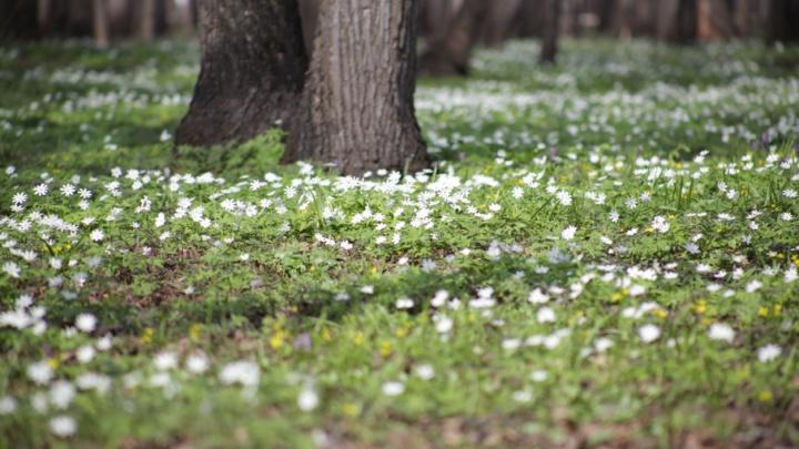 В Уфе участок городского леса стал частной собственностью