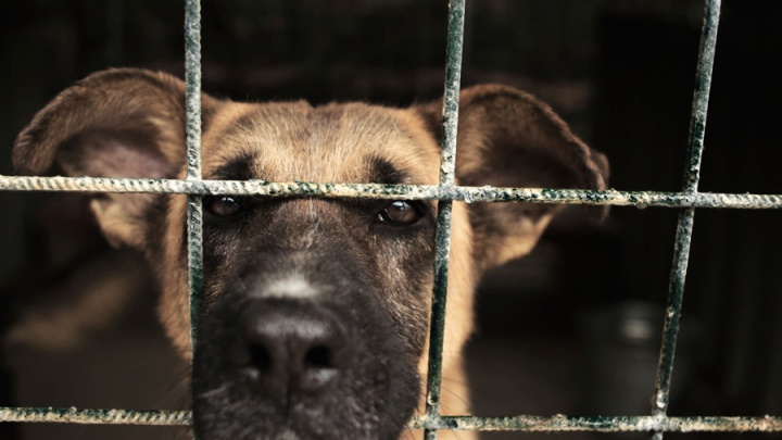Желающие заработать на отлове собак в Норильске выбрасывали трупы животных в мусорный бак