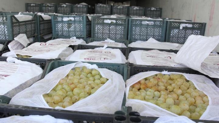 Из Самарской области выдворили фуру с 20 тоннами контрабандного винограда
