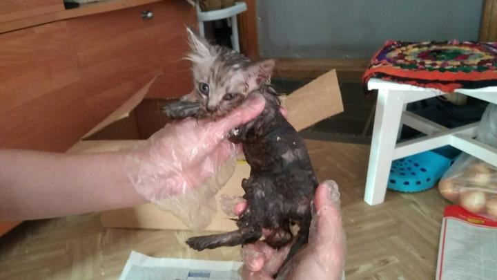 Нашли приклеенным к доске: в Башкирии зоозащитники спасли котёнка