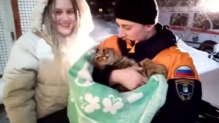 Пряталась от холода: спасатели достали застрявшую кошку из трубы водослива. Спасение попало на видео