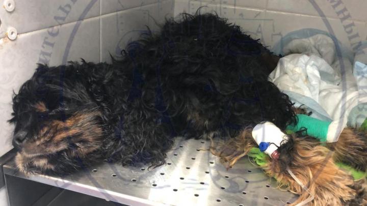 Хозяйка собак, пострадавших при пожаре в Екатеринбурге:«Мне не разрешают забрать даже труп»