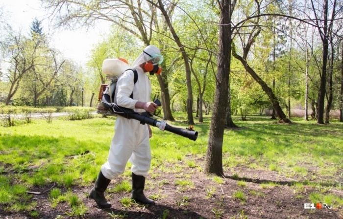 Лесопарки в городе обычно обрабатывают, а вот в лесах надо быть осторожными