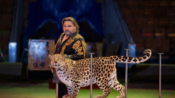 Леопард в городе: в Ростове состоялась премьера циркового шоу легендарной династии Филатовых