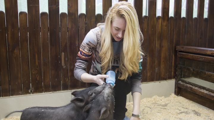 Виляют хвостами и хрюкают: знакомимся с символами года в омском зоопарке