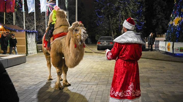 Ростовские зоозащитники заявили в полицию на Деда Мороза у парка Горького